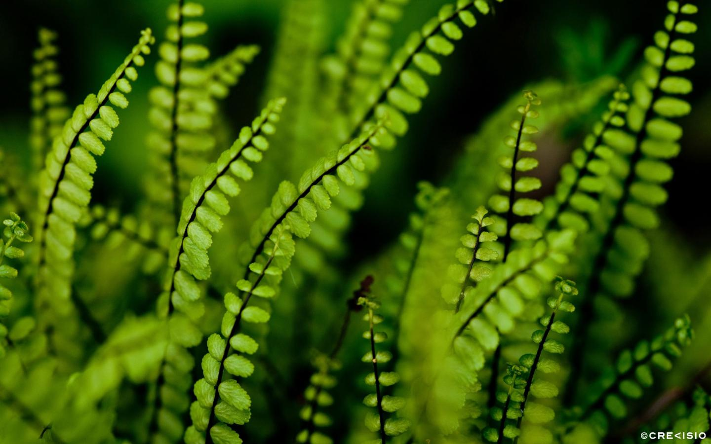 Green Black by Crevisio