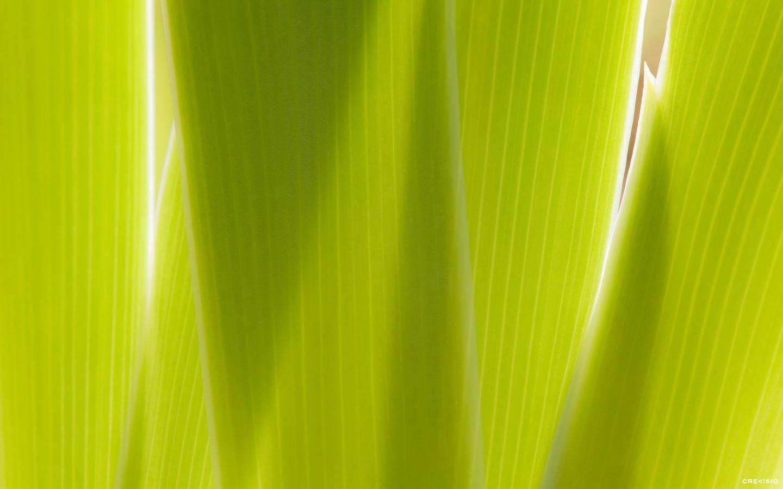 Green Blast by Crevisio