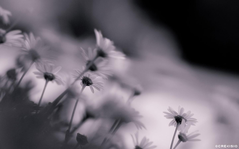 Black & White Bottom by Crevisio