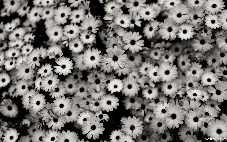 Flower Pattern by Crevisio
