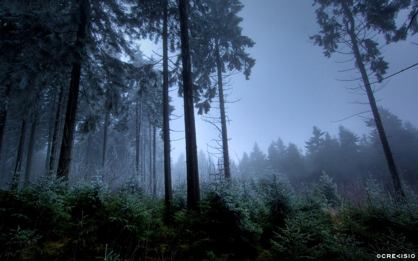 Feldberg Forest by Crevisio