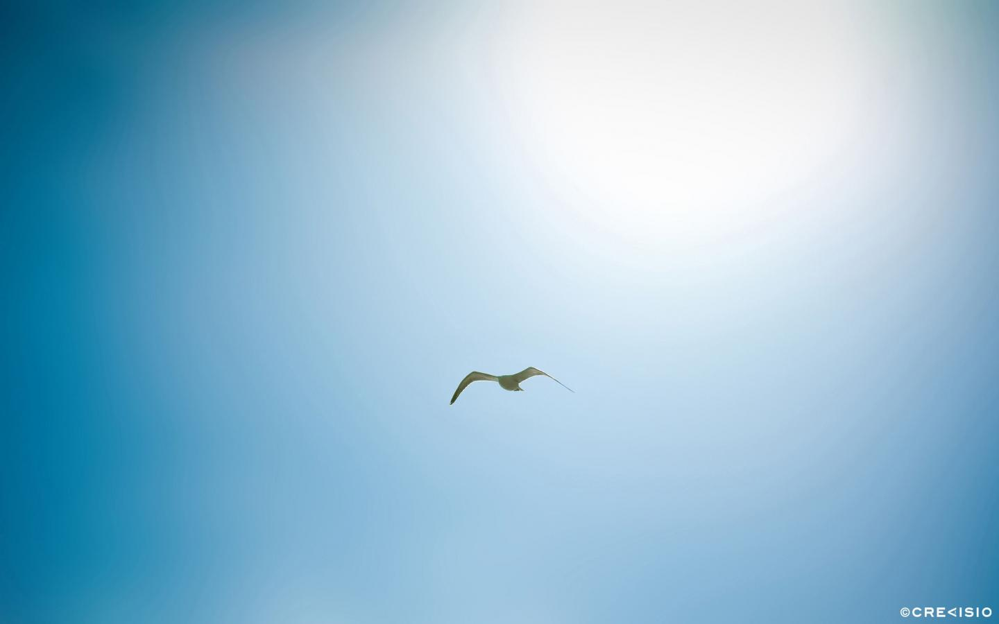 Lonely Bird by Crevisio