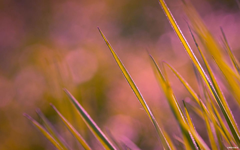 Purple Green Grass by Crevisio