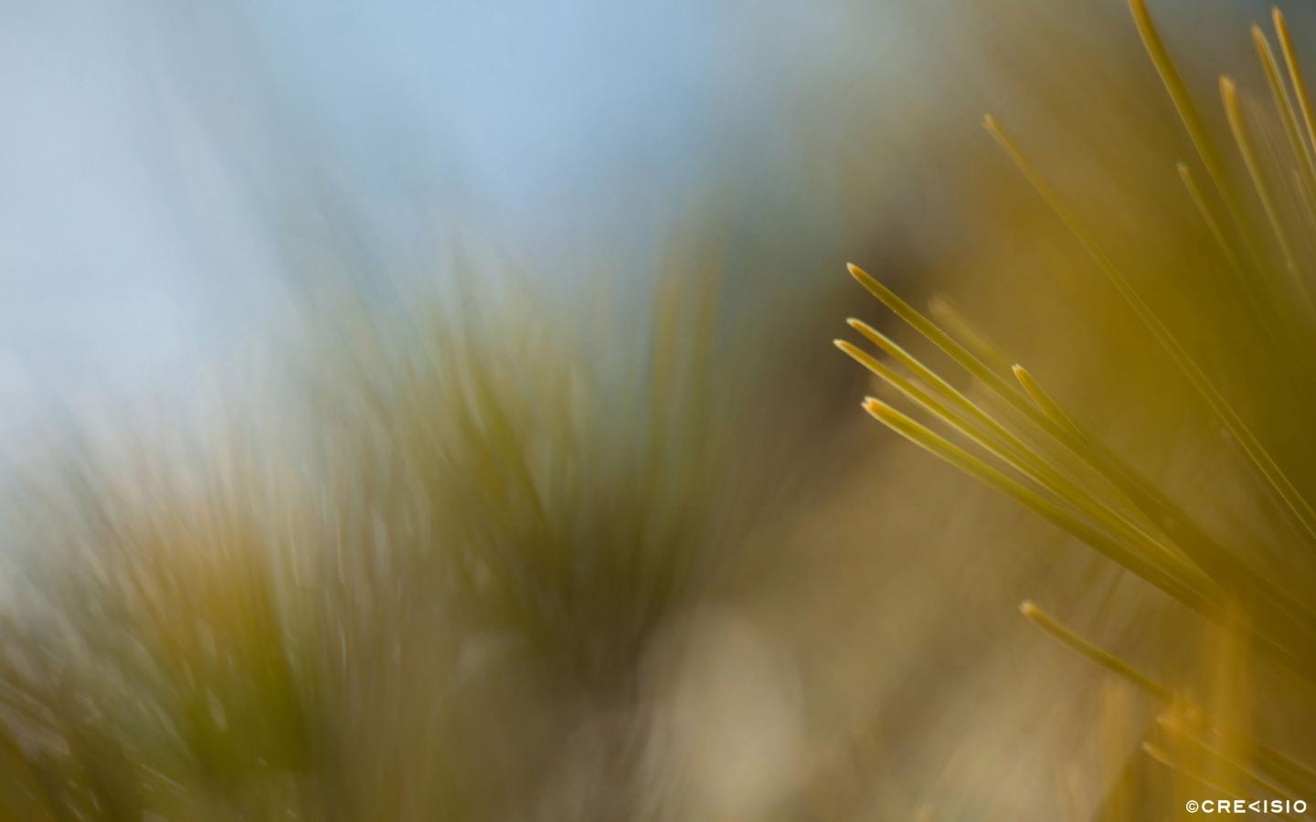 Blurred Bushes by Crevisio