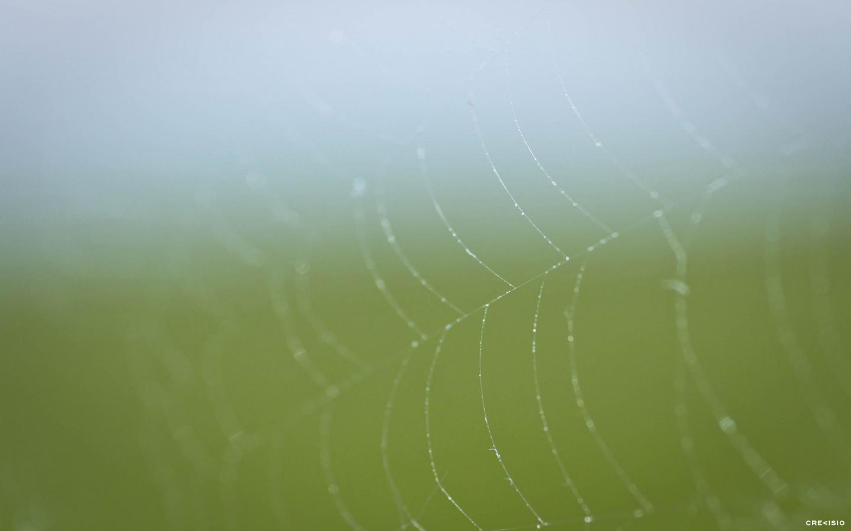 Endless Spiderweb by Crevisio