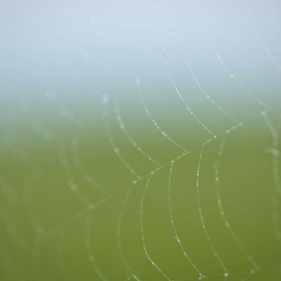 Endless Spiderweb by Crevisio