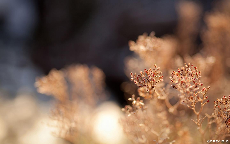 Summer Heat by Crevisio